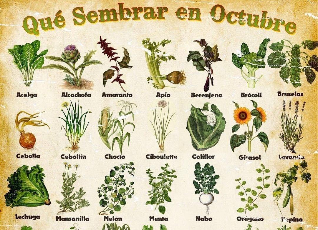 Atención: mirá lo que podemos sembrar en la huerta en este mes de Octubre