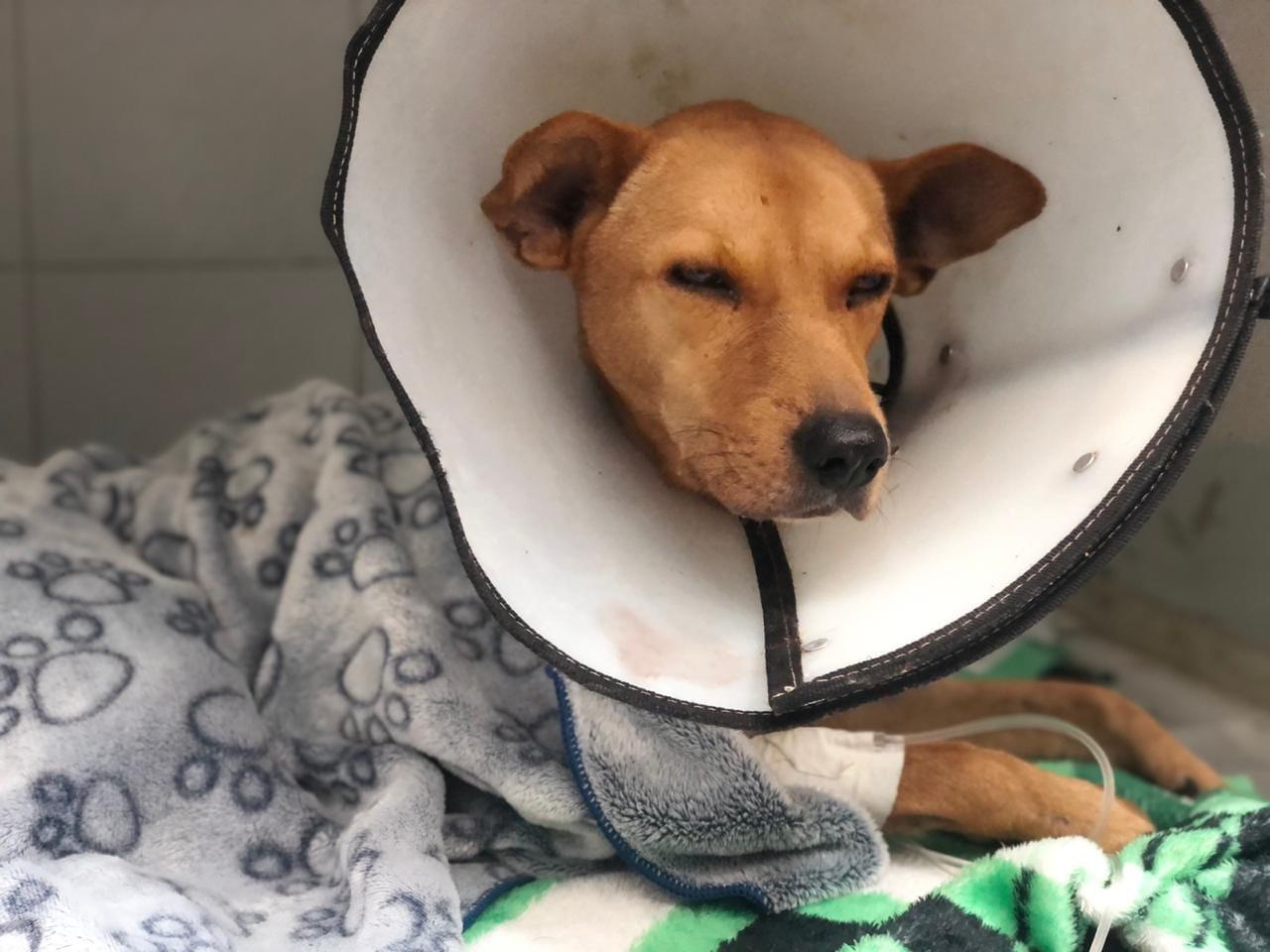 Colombia: la indignante historia de Aquiles, el perro que murió tras ser abusado sexualmente