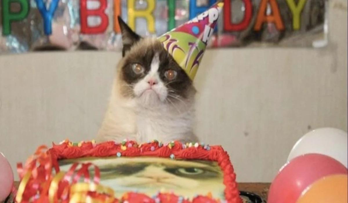 Mundo insólito: en Chile 15 personas se contagiaron de coronavirus por asistir a la fiesta de cumpleaños de un gato