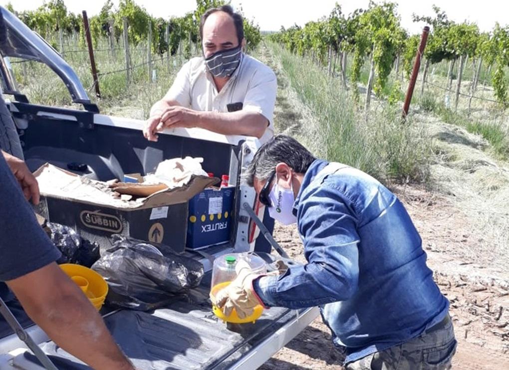 Elaboran un nuevo protocolo dentro del programa de control y erradicación de mosca de los frutos