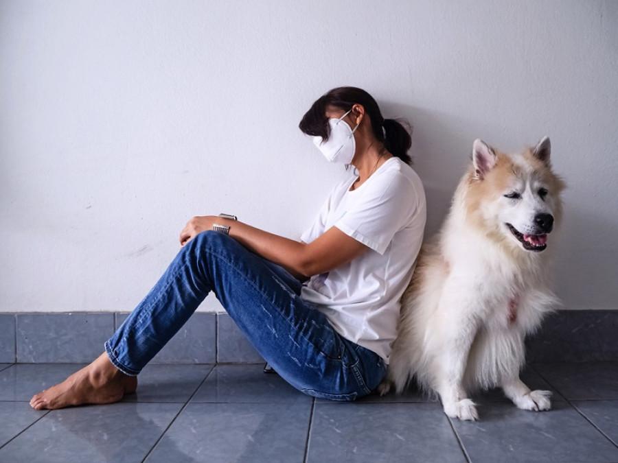 Veterinario aseguró que si una persona se encuentra contagiada de COVID-19 puede transmitirlo a su perro o gato
