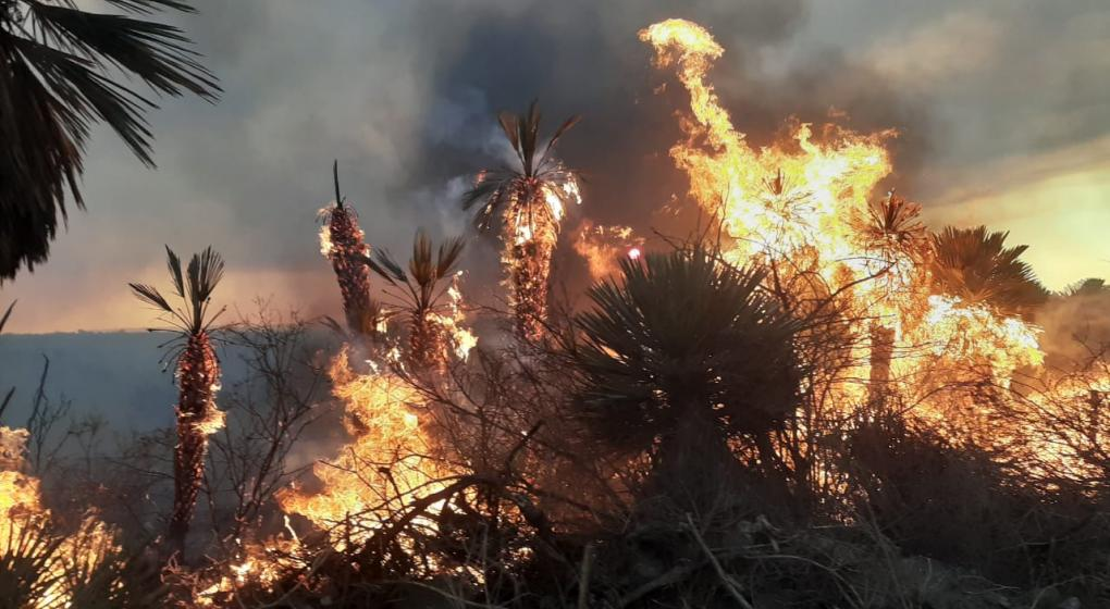 Incendios de 2020: El impacto sobre el escaso bosque nativo que queda en Córdoba