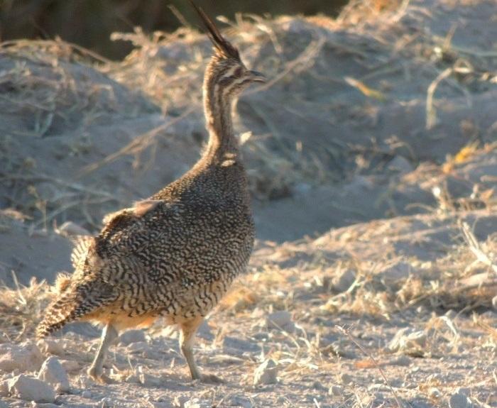 Tenencia ilegal: Rescataron más de 30 ejemplares de fauna nativa en Guatraché y La Adela