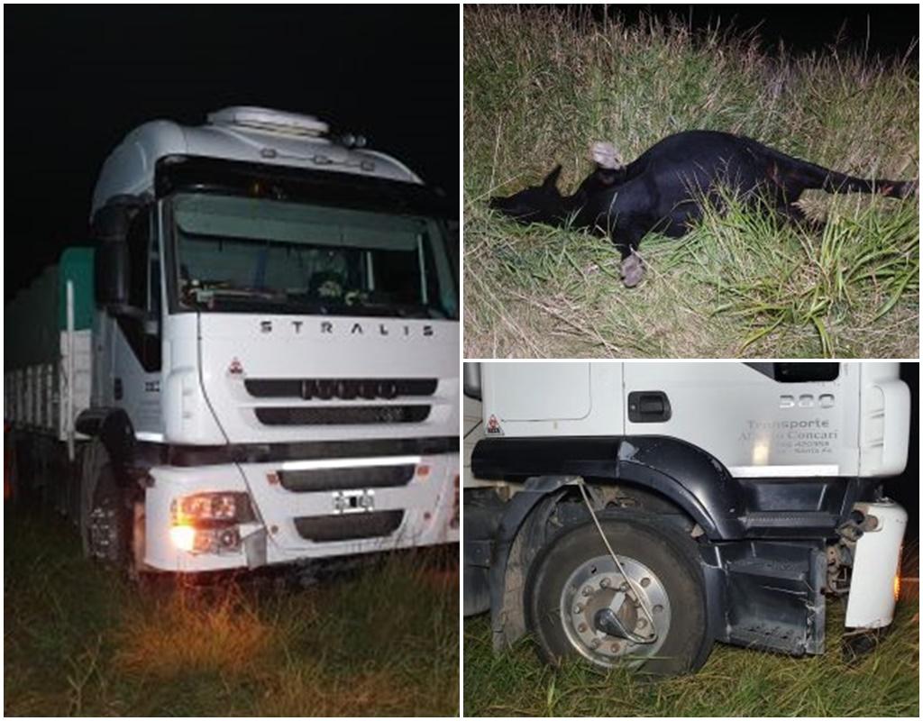 Camionero pampeano chocó animales sueltos en ruta 33, pero no sufrió lesiones