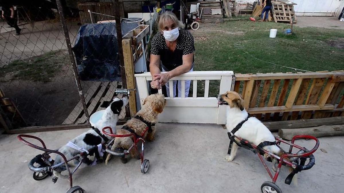 Mendoza: Un matrimonio atiende un hospital para perritos discapacitados y rescatados de la calle