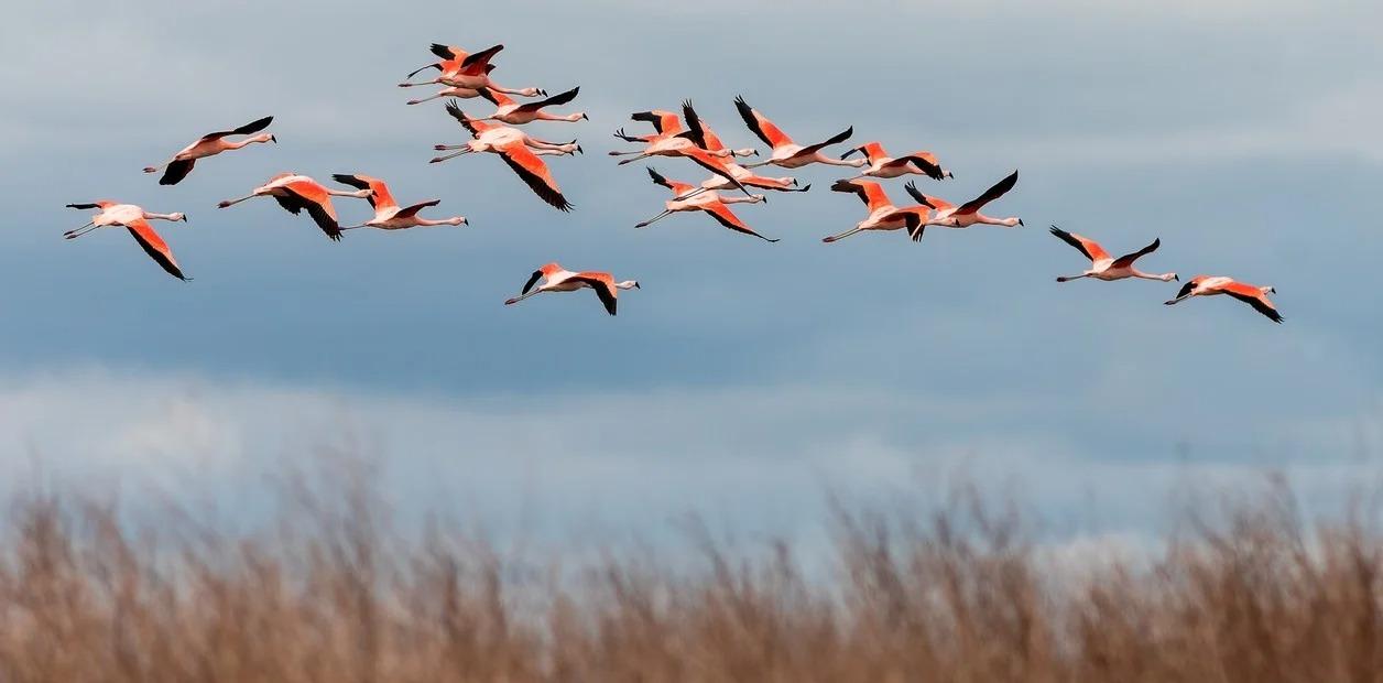 """Ecoturismo: Ansenuza, el """"mar cordobés"""" que espera convertirse en parque nacional"""