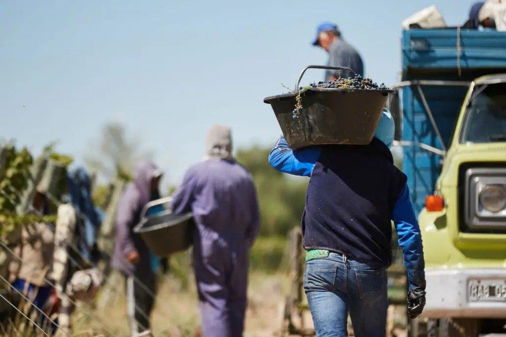"""Se expande la industria vitivinícola en La Pampa: """"Siempre se tuvo fe y confianza en que las características del suelo y el clima daban todo para producir"""""""